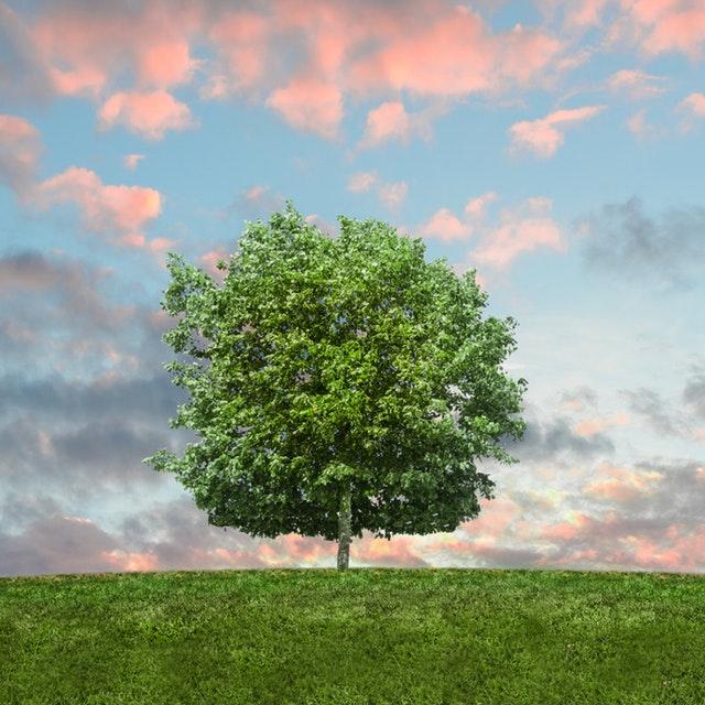 Ett grönt träd